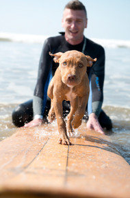 dog photographed surfing with owner
