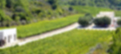 Vineyard anastasia triantafyllou wines rodos