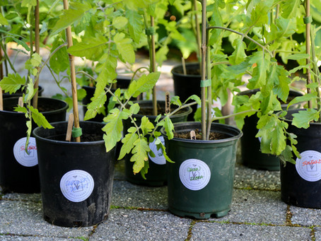 Garden Gurus Project