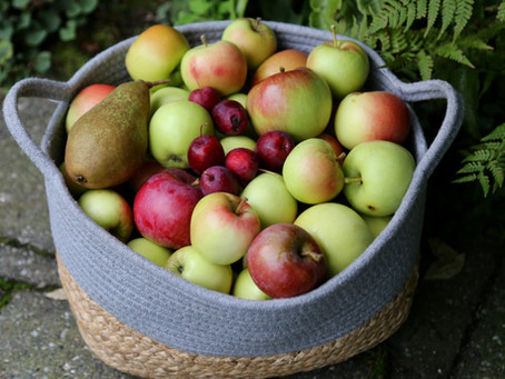 The Littlest Orchard