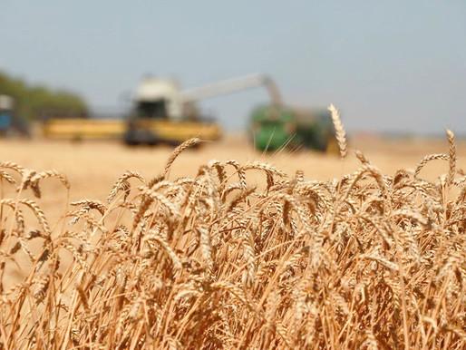 Липецкие аграрии достигли рекордных показателей в 2020 году