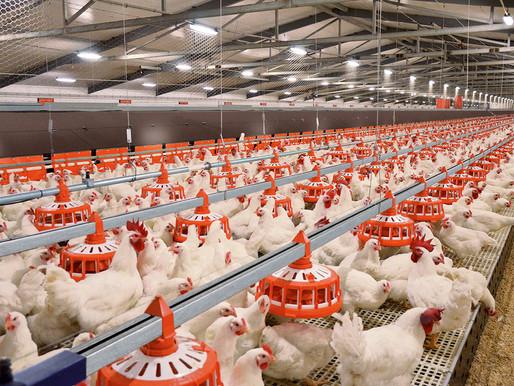 Инвестиционные проекты в сфере птицеводства реализуются в Липецкой области