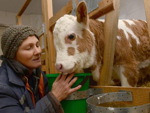 Липецкая область направила на поддержку фермеров и развитие сельской кооперации около 100 млн рублей