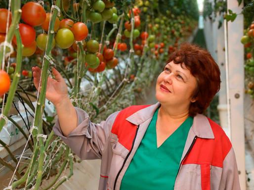 Липецкая область — лидер в России по сбору тепличных овощей