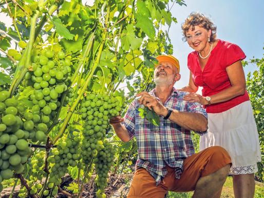 Фермеры Липецкой области развивают сельский туризм