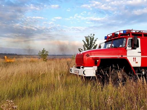 В Липецкой области запрет на посещение лесов продлили до 19 августа