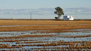 Liminar garante serviço de energia rural adequado à irrigação de arroz