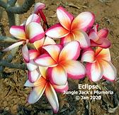 Eclipse Jan 2020.png