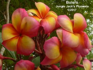 Introducing Bolero
