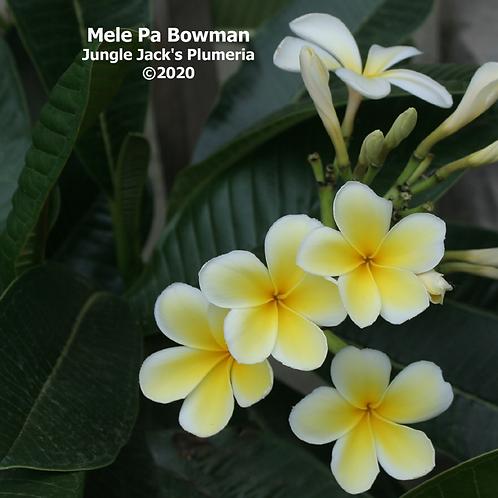 Mele Pa Bowman