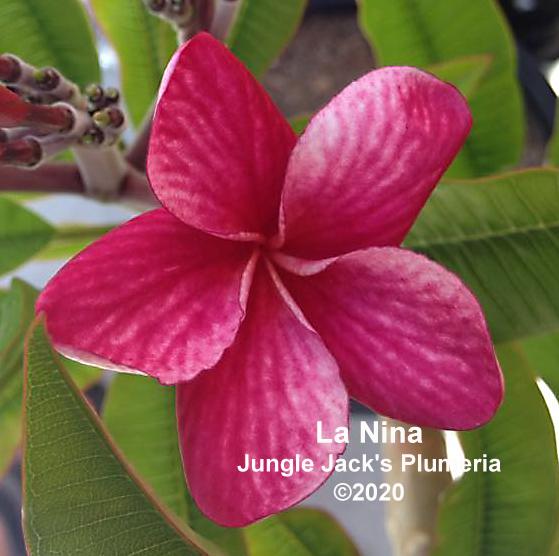 La Nina MR