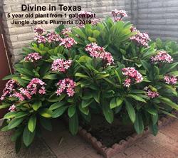 Divine in Texas