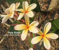 Pale Rider T