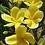 Thumbnail: Inca Gold
