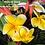 Thumbnail: Yellow Gina