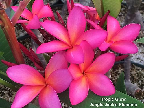 Tropic Glow
