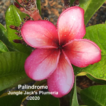 Palindrome John.png