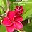 Thumbnail: Pinot Rouge
