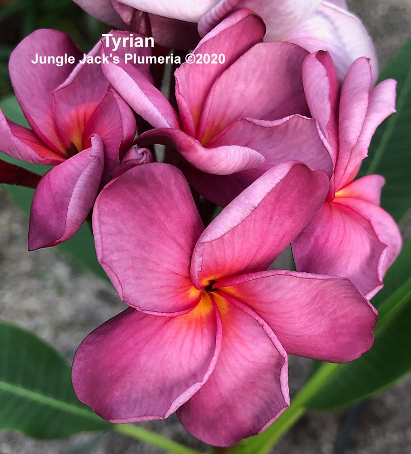 Tyrian V7