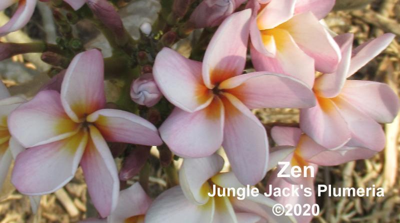 Zen T