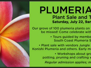 LA County Arboretum Plumeria Day, July 22nd