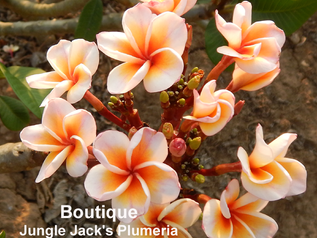 Introducing Boutique (and don't miss our July 7th Open House)