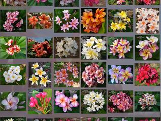 Incredible Seeds make Incredible New Blooms