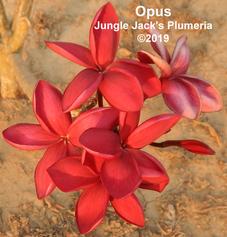 Opus-3 copy.png