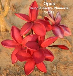 Opus-3