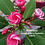 Thumbnail: Rosebud