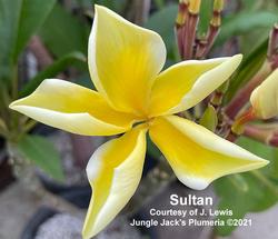 Sultan Jenn 5