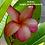 Thumbnail: Soluna