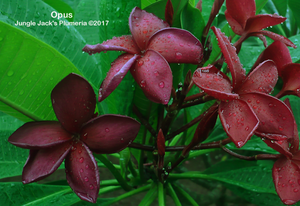 Opus - available now!