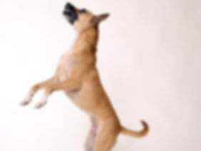 147662974-control-dog-jumping-632x475.jp