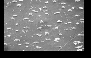 PET barrier film