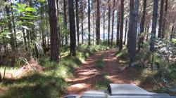 Argo trip through the forest.