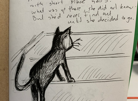 The cat heard a clamor