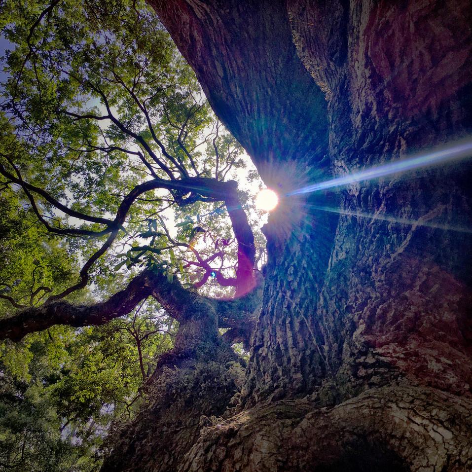 Angel Tree, South Carolina