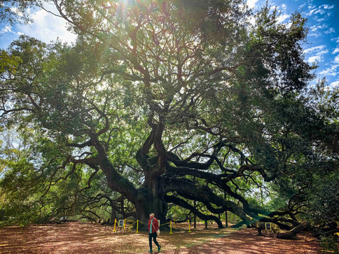 The Angel Oak and Mom
