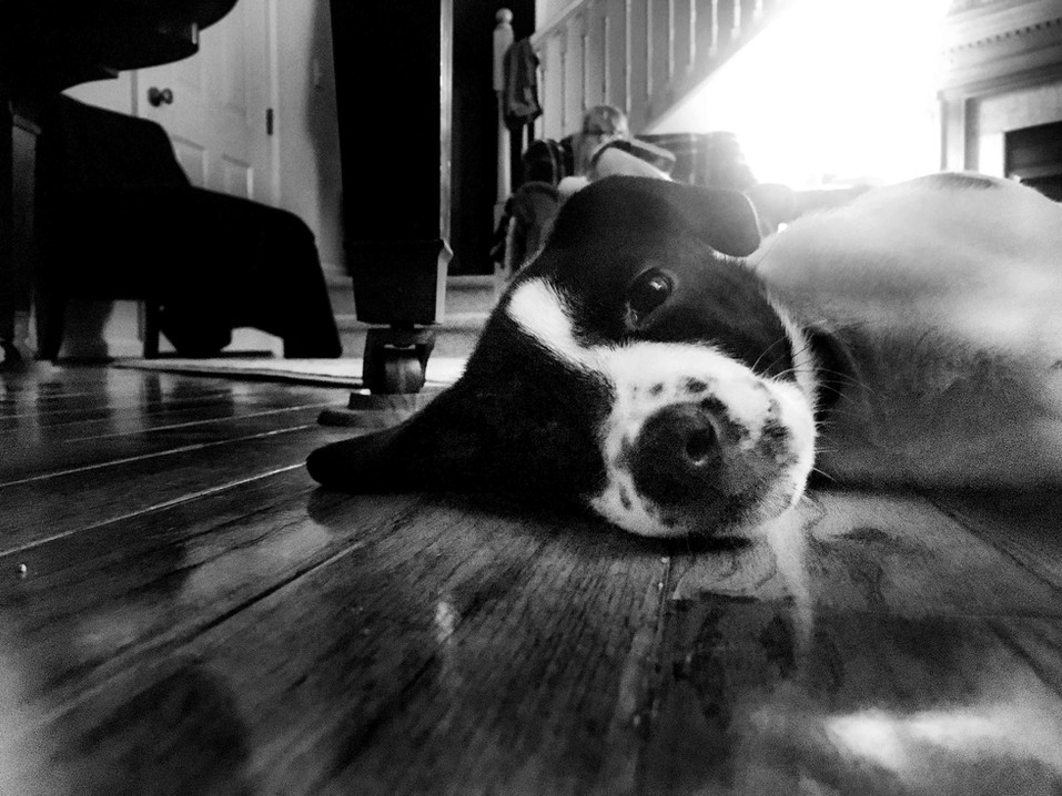 Remy on the floor