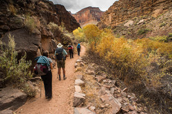 Hikers in the Grand Canyon