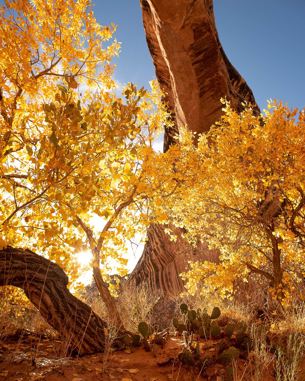 Utah Gold