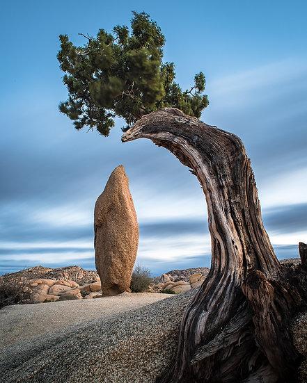 Juniper & Monolith