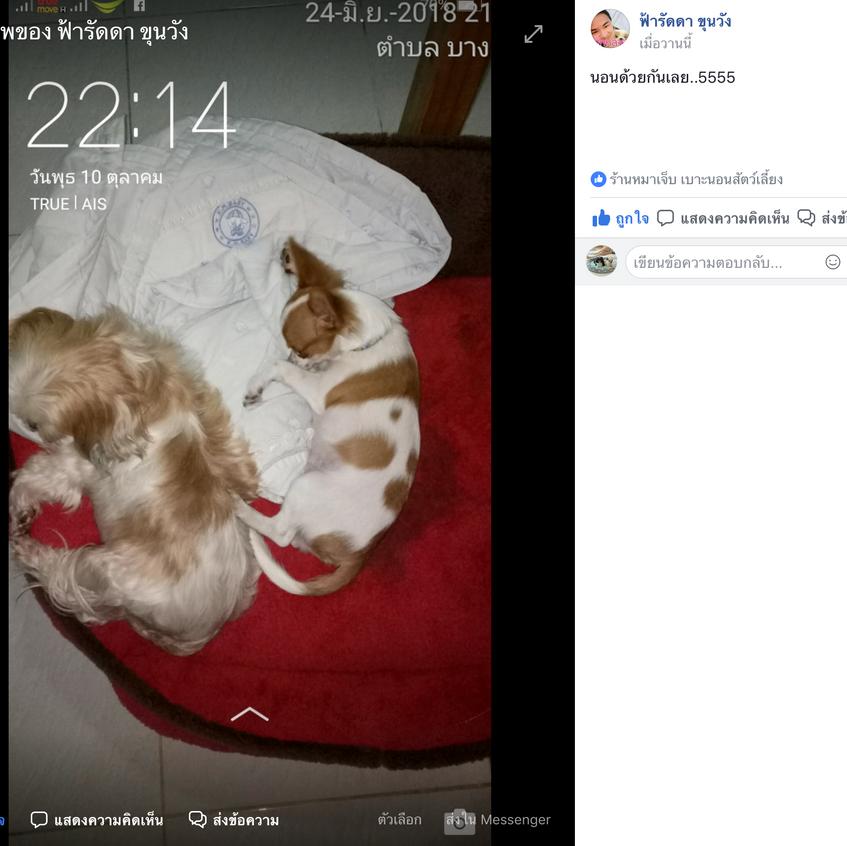 Screen Shot 2561-10-27 at 11.18.40 AM