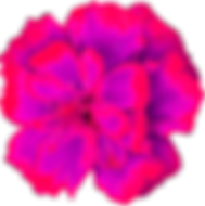 Flor_CEmpazuchitl_filter_pink.png