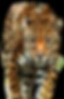 Jaguar_walking_duotone.png