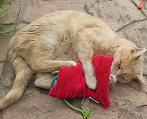 Cat playing with valerian cat cushion