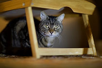 Cat Hiding Unsplash. julian-dutton-VgzLV