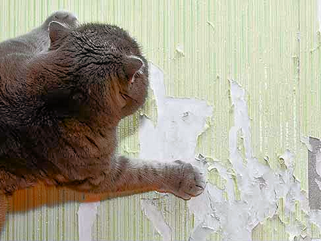How To Stop A Cat Scratching Walls and Other Household Objects