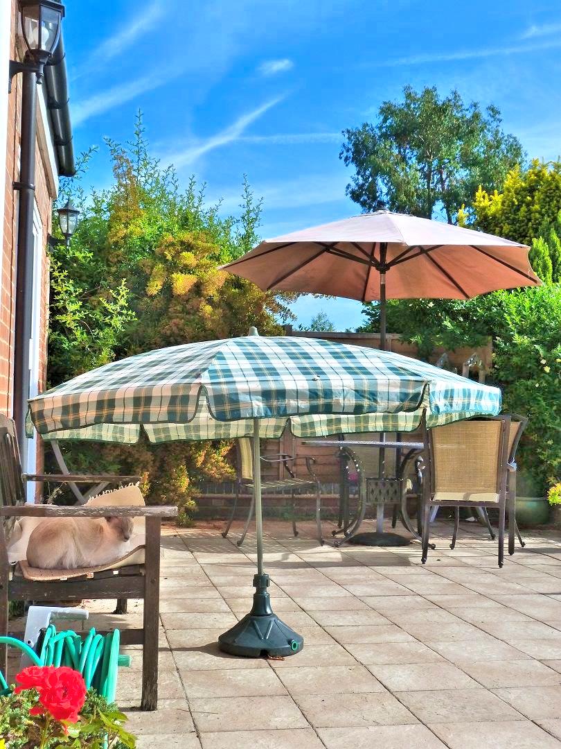 Cat relaxing under parasol